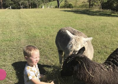 Jude and the alpacas